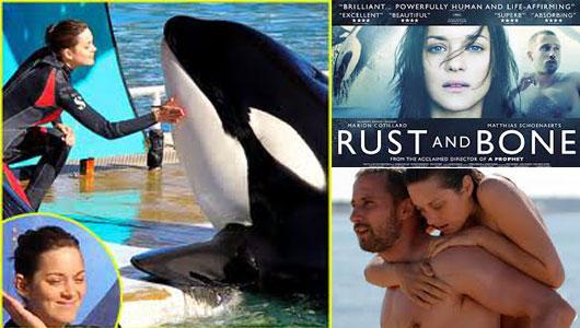 australian online casino paypal orca auge